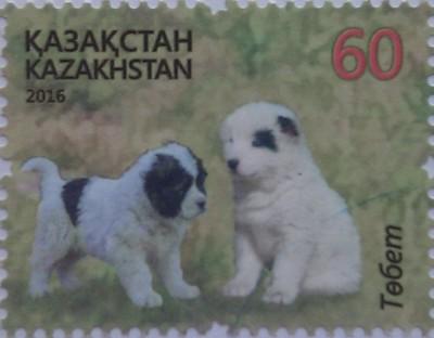 2016 № 954 Собаки казахск породы Тобет два щенка 60