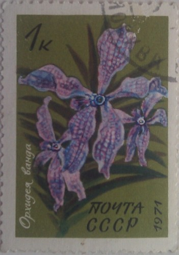 1971 орхидея ванда 1к