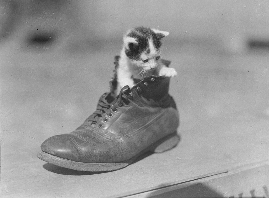 Kattunger, ca. 1937.