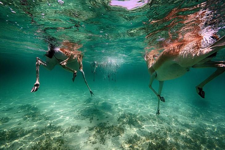 2. «Один из моих лучших погружений было на крошечном островке Сипадан в Малайзии. Я только что закон