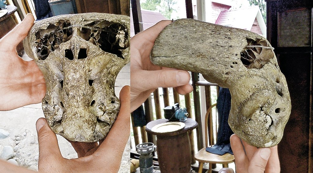 ЗВЕРСКИЕ ВЕЩИ ПРОИСХОДЯТ ВШТАТАХ: вКалифорнии обнаружили череп странного существа