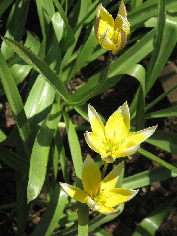 Весна в Острове