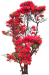 флора