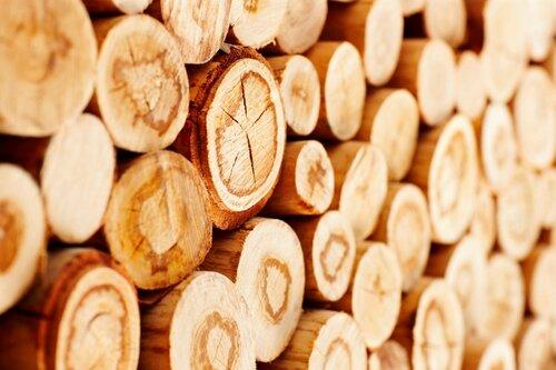 Молдова может остановить экспорт древесины