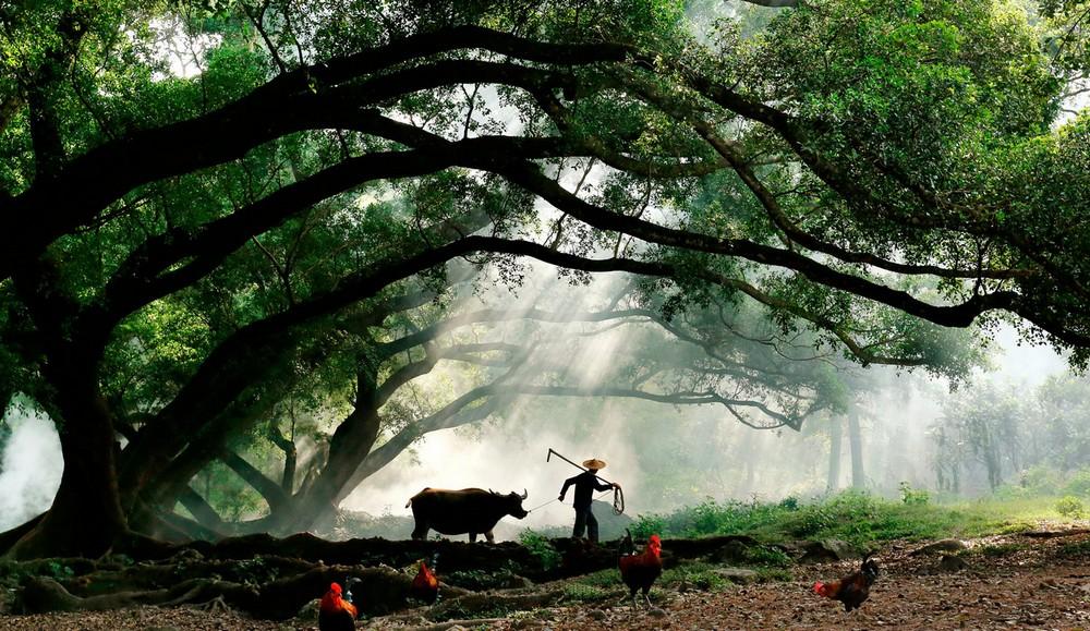 Восхитительные снимки Адама Вонга