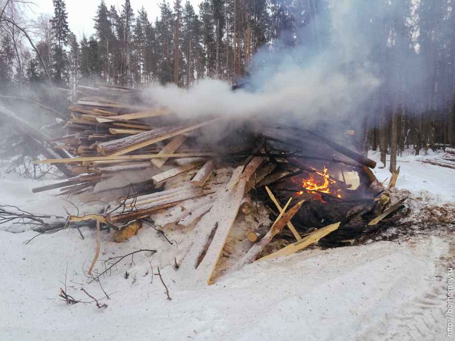 в лесу горит древесина