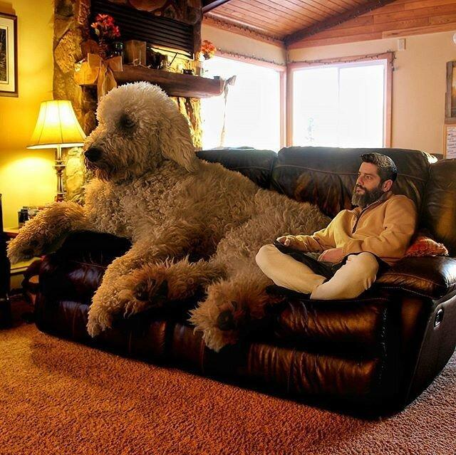 собака Chris Cline