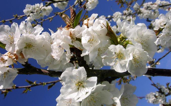 квіти на дереві
