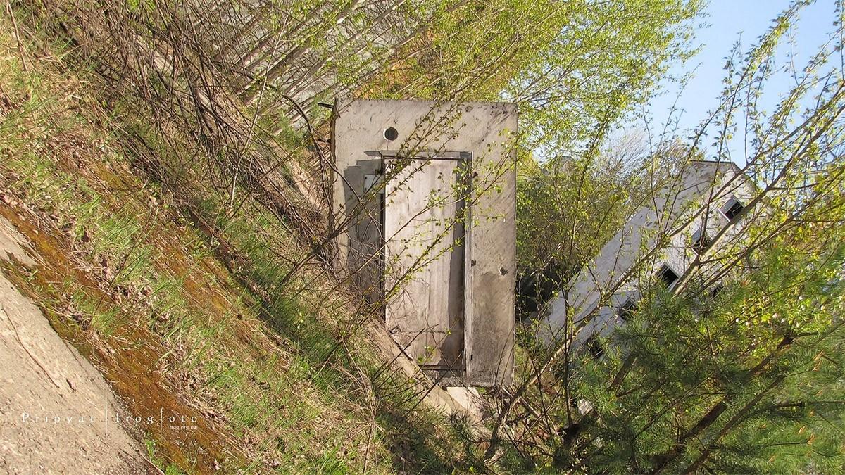 5. Заасфальтированные площади сначала покрываются мхом, а потом зелеными рощицами.
