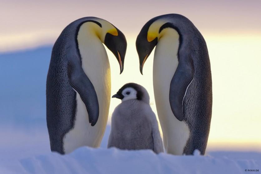Родительская любовь. Автор фото: Аннелиза и Клаус Поссберг