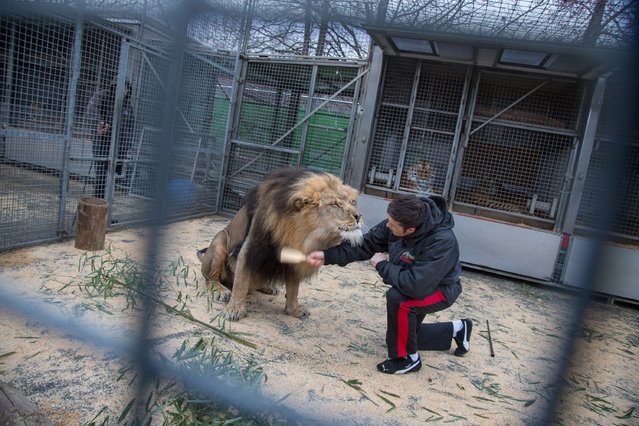 Sandra Hoyn, Germany. Shortlist, Professional , Daily Life. Big Cats Trainer and Presenter Alexander