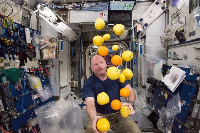 NASA astronaut Scott Kelly corrals the supply of fresh fruit that arrived on the Kounotori 5 H-II Tr