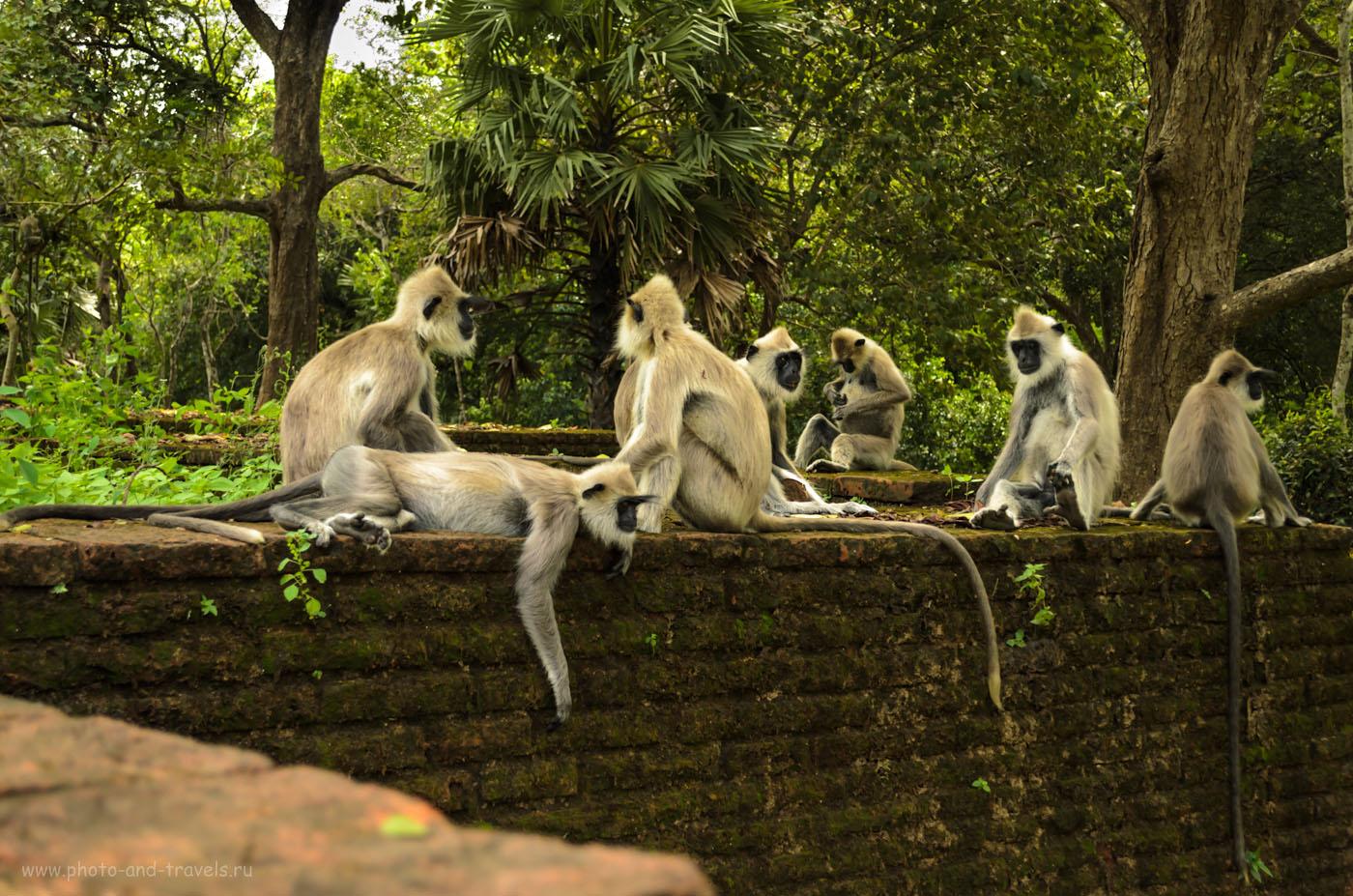 Фото 5. Контролеры могут проверить наличие билетов в любое время. Отзывы туристов об экскурсии в Полоннарува (Polonnaruwa) на Шри-Ланке. Отдых на острове самостоятельно.