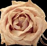Vintage_Roses_Lilas_el (36).png