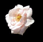 BCD_FloweryDay_el (32).png