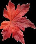 bee_autumncomes_el30.png