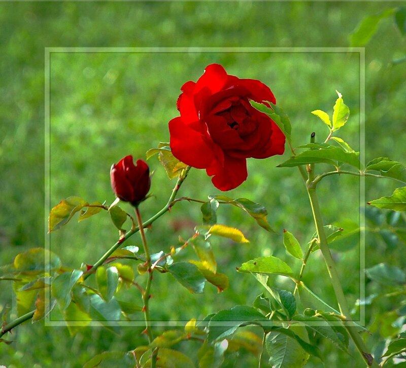 http://img-fotki.yandex.ru/get/27/gre-galina1.10/0_168a1_215a25fc_-1-XL.jpg