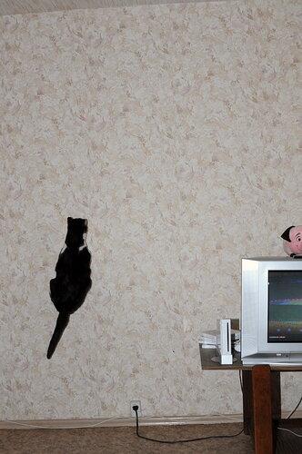 Кошка?