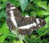 бабочки, мотыльки, стрекозы
