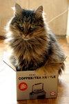 Кошки и прочие