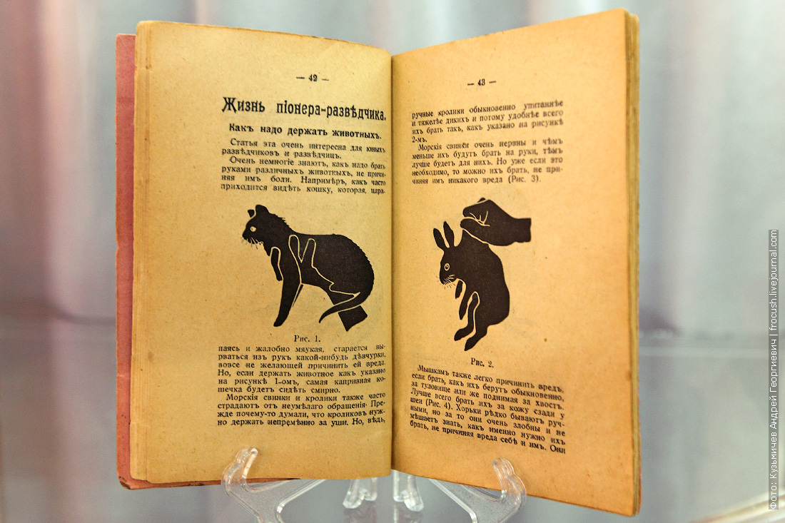 Животный мир нашего края Камышинский историко-краеведческий музей