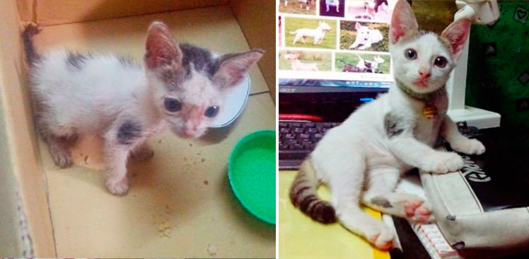 спасенная кошка