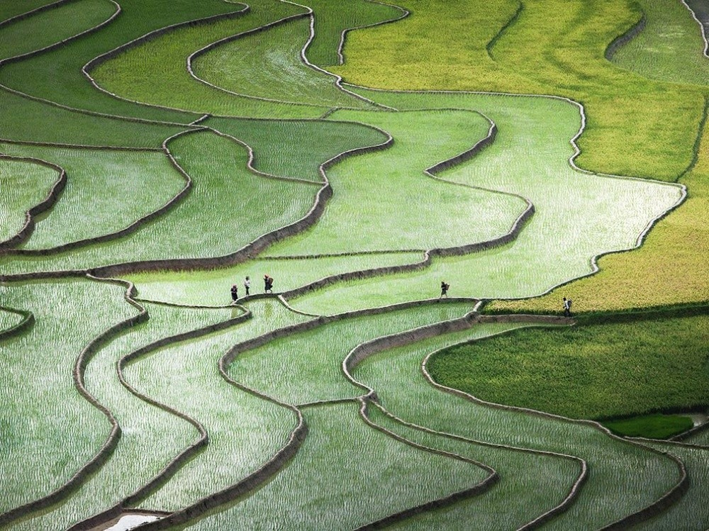 5. Ведущие линии, Вьетнам. (© Qu?nh Anh Nguyen)