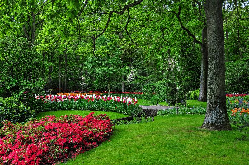 Первых цветов сияние, зелень травы молодой