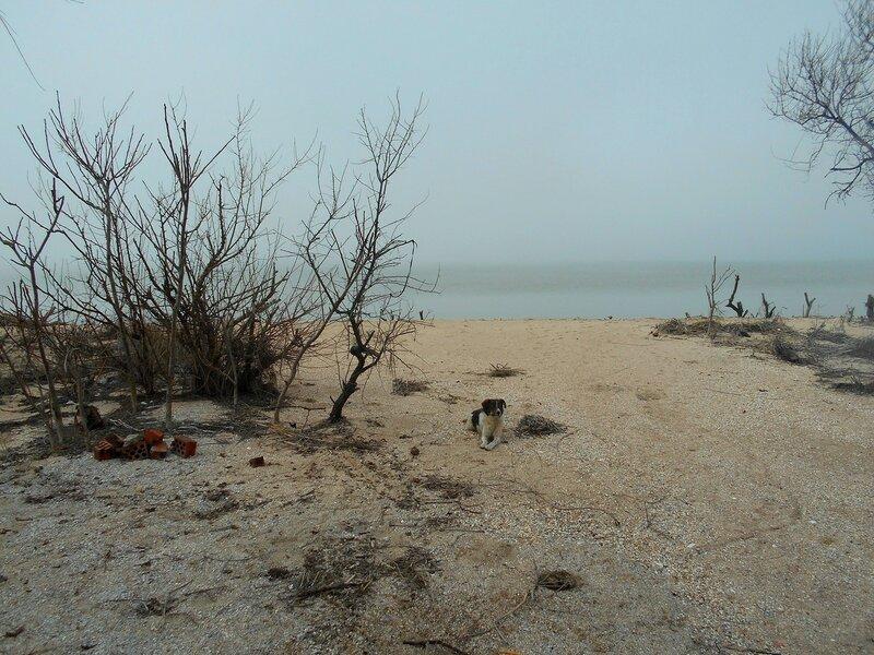 На берегу весеннем ... DSCN4407.JPG