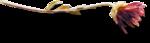ldavi-fallingleavesautumntea-driedflower4.png