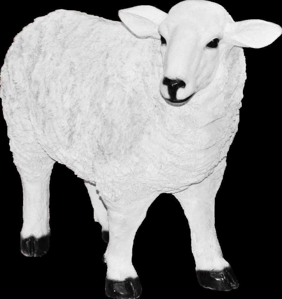 Картинки для детей овца на прозрачном фоне