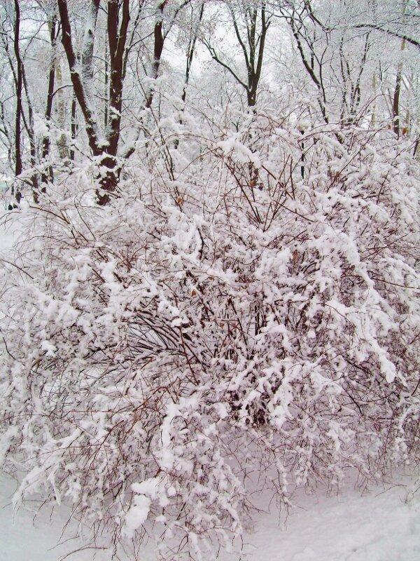 Куст под снегом