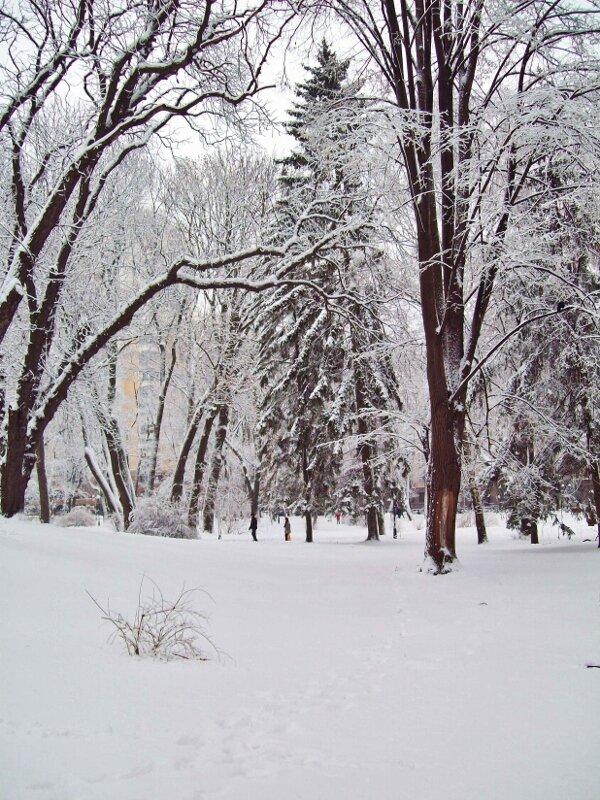 Зима в Мариинском парке