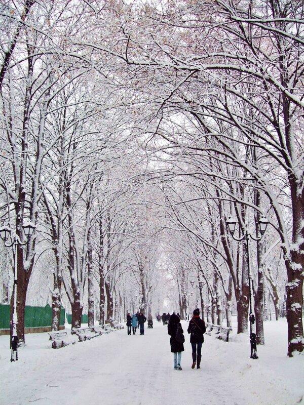 Зимняя аллея Мариинского парка