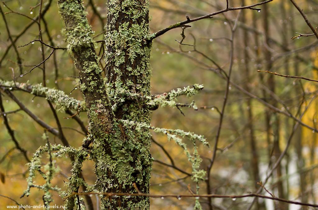 Фотография 13. В древнем лесу. Природный парк Оленьи ручьи. Отзывы.