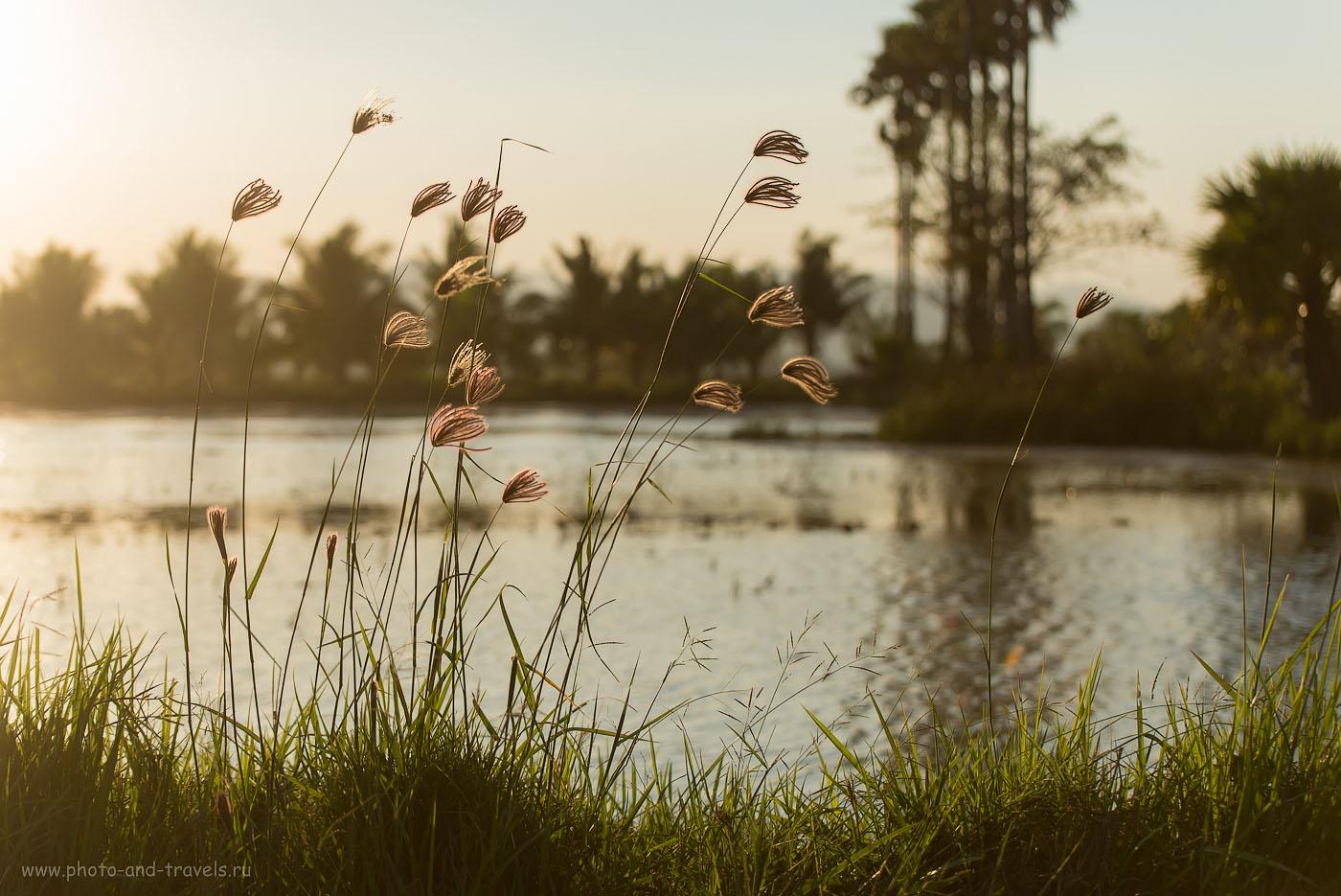 Фотография 2. Кто не любит фотографировать в контровом закатном свете? Красоты Тайланда. Окрестности города Хуа Хин (200, 70, 4.5, 1/1600)