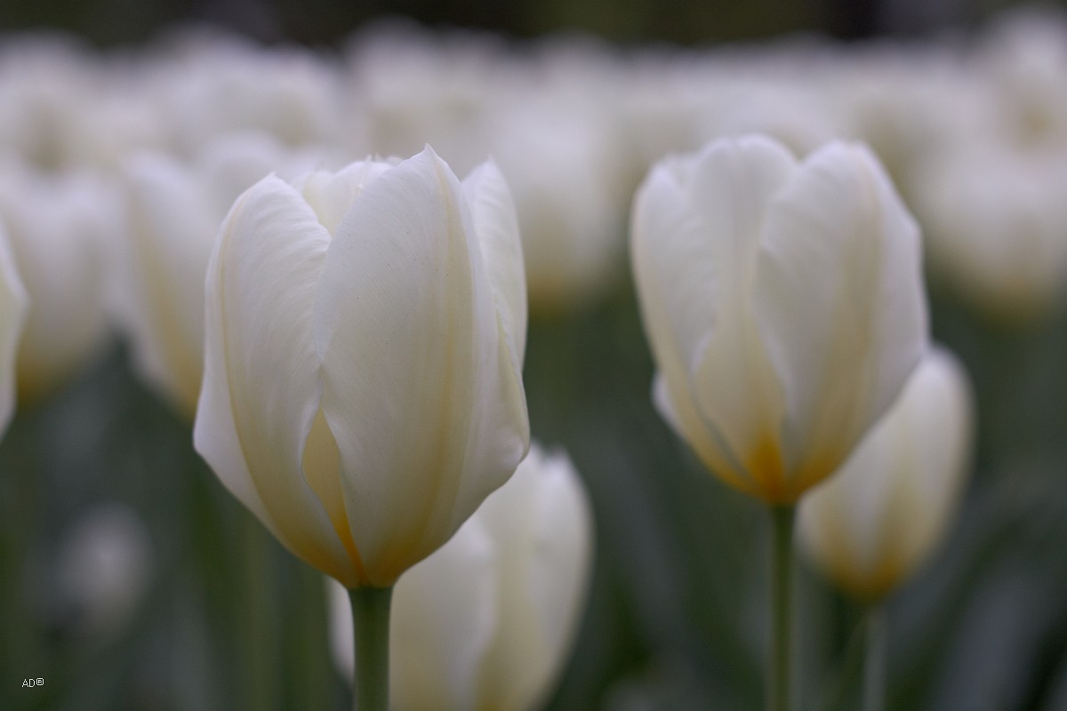 Весна в Ботаническом саду