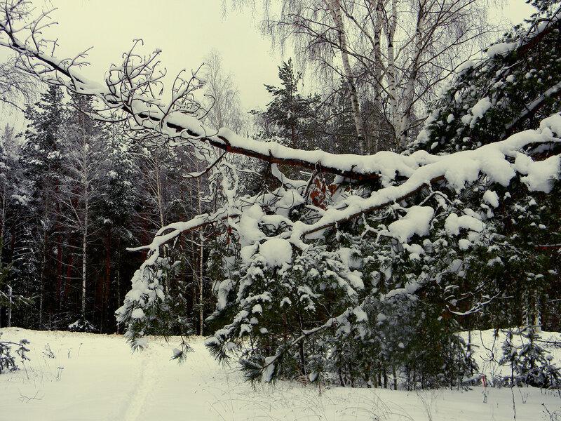 К чему снятся снег на дереве