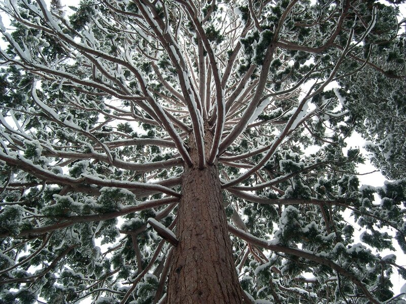 Никитский ботанический сад зимой.