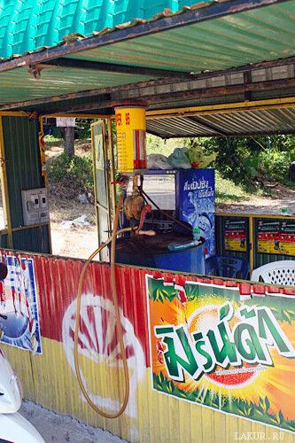 таиланд топливо скутер