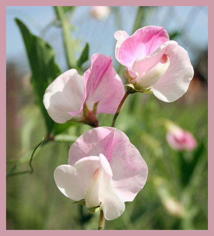 С меткой цветы на яндекс фотках
