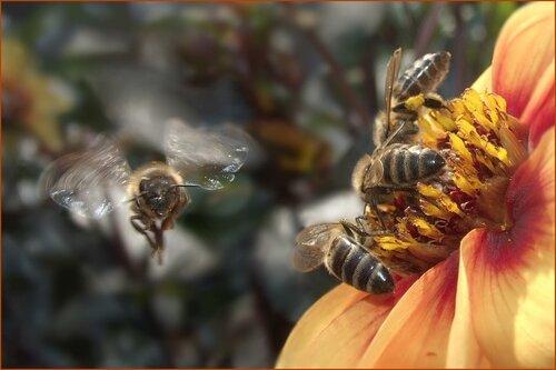 стрекозы ловящие на лету других насекомых пчелы собирающие нектар растений