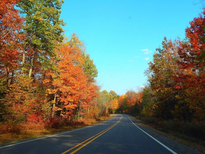 Осенняя дорога и олени.