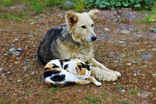 Друзья-товарищи в ожидании Дяди Фёдора