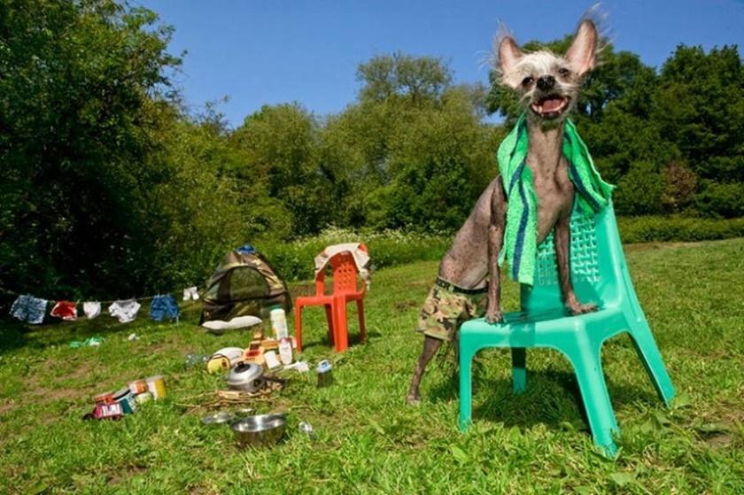 Проект «Чини». Фотографии китайской хохлатой собачки 0 141ab1 b20d1e3a orig