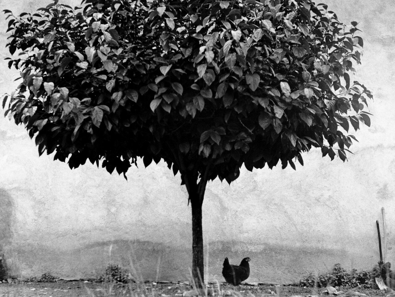1950. Дерево и птица