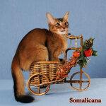 Somalicana Botichelli 4 month