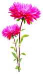 sekadadesigns_pinkflowers_element(12)