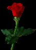 Valentin_scrapset1_Rose1