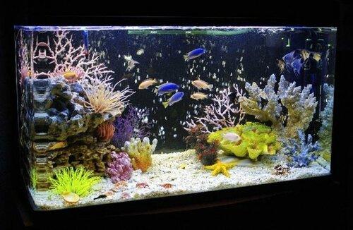 akvarium5.jpg